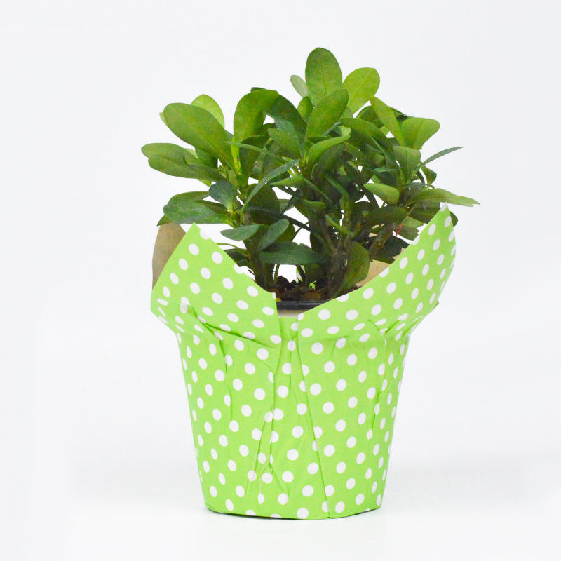 Wholesale High Quality Kraft Paper Flower Pot Cover